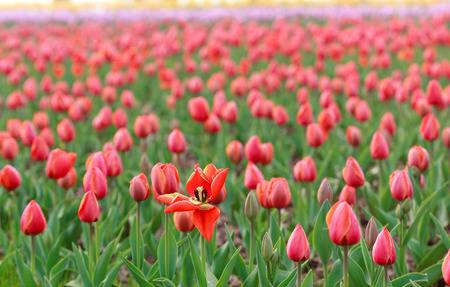 Fra i tulipani di Lubiana Visita alla grande fiera di primavera – 27 Aprile – ULTIMI POSTI!