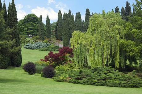 parco giardino sigurta vicino lago di garda - Le rose del parco Sigurtà e le acque di Borghetto - Domenica 24 Maggio 2020