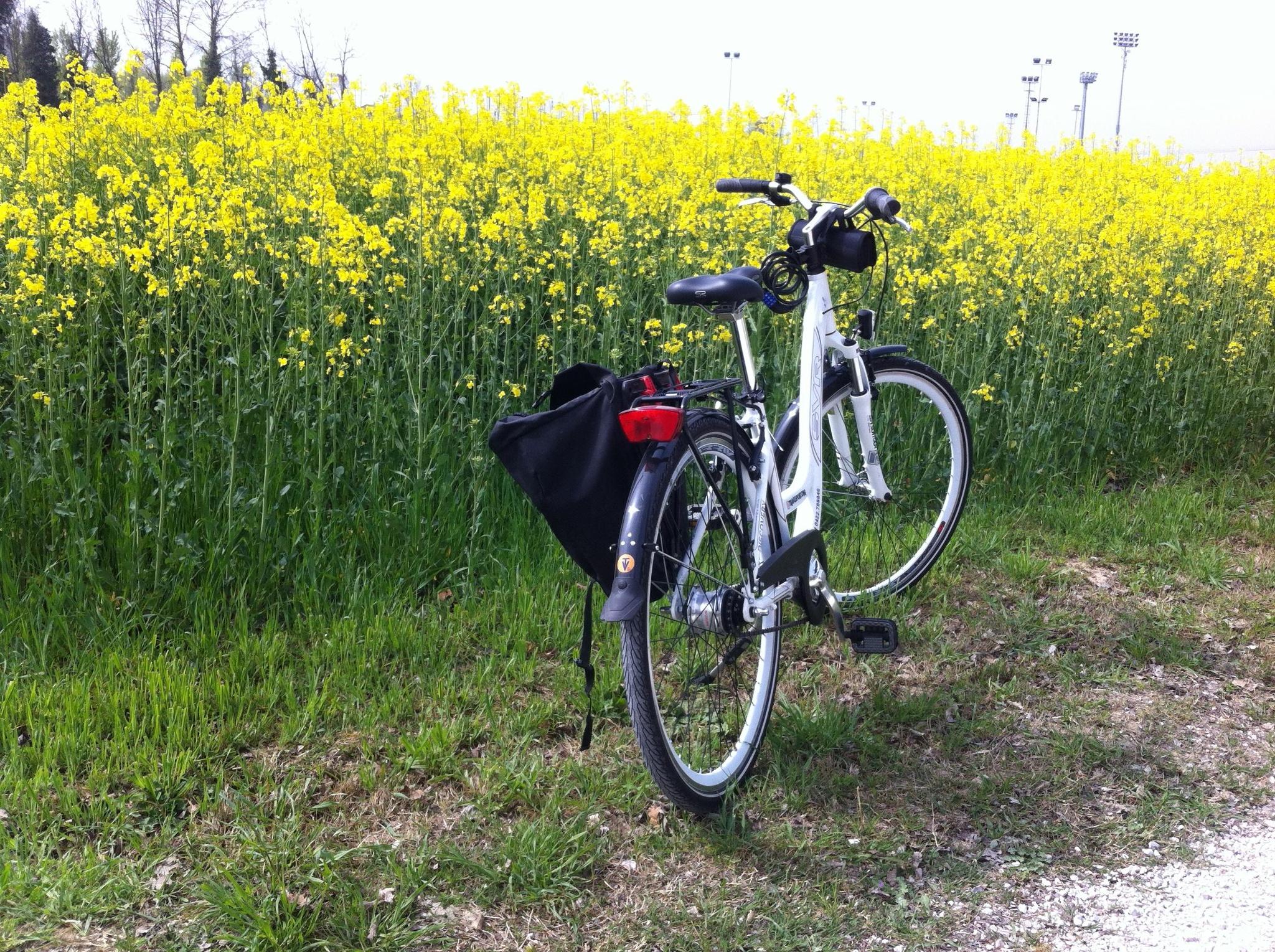 bike boat - Proposta di turismo attivo lungo il fiume Sile - BIKE & BOAT