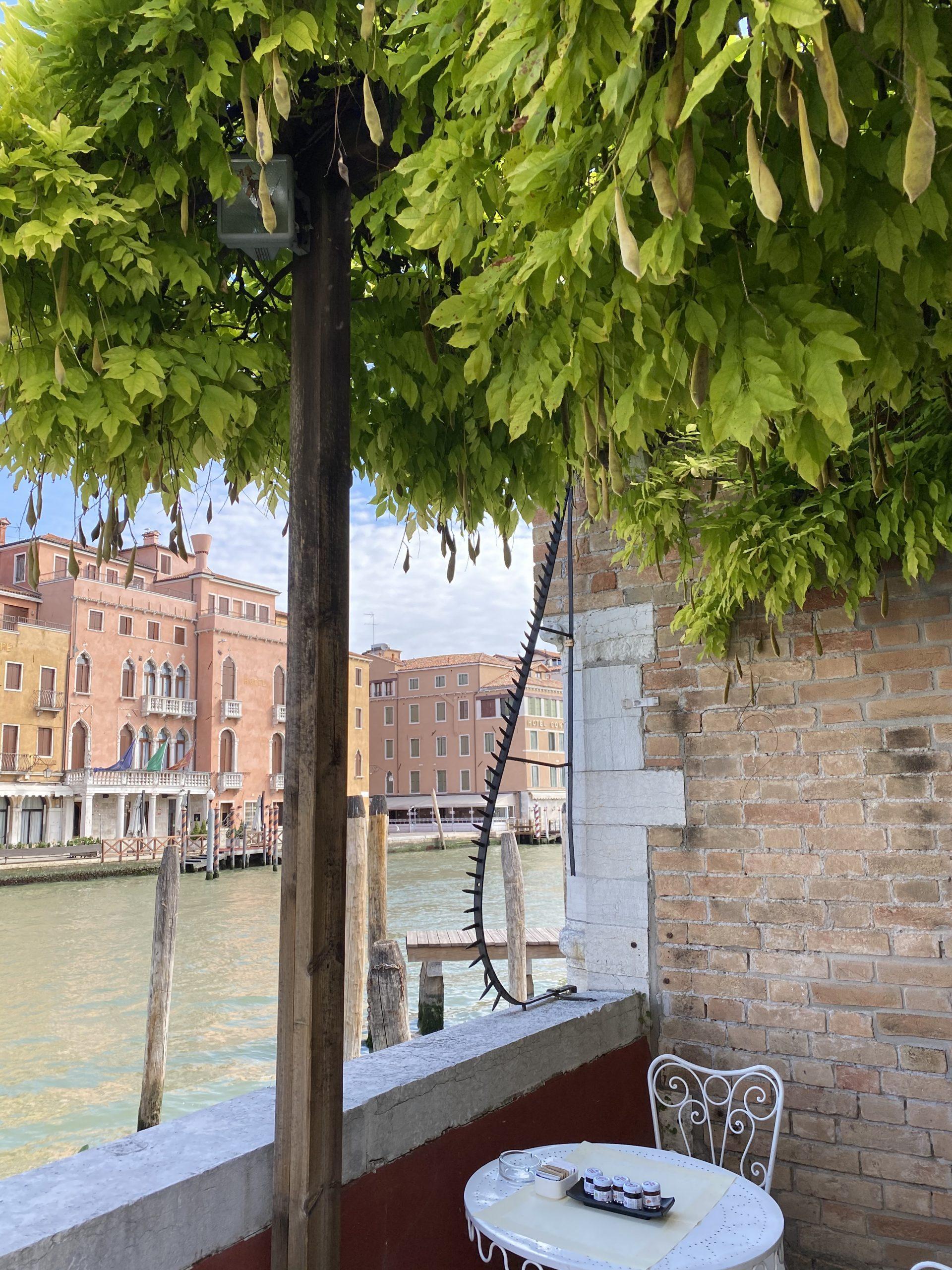 giardini 2 scaled - Primavera a Venezia - visita ai giardini del 21 marzo 2021